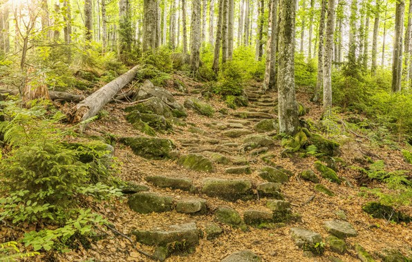 Картинка Природа, Деревья, Лес, Камни, Ступеньки