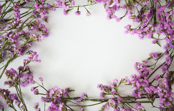 Картинка цветы, фон, рамка, flowers, purple, violet, frame