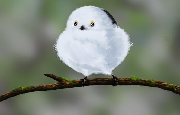 Картинка арт, птичка, картинка, детская, Snowball, Nikoleta Jovanovic