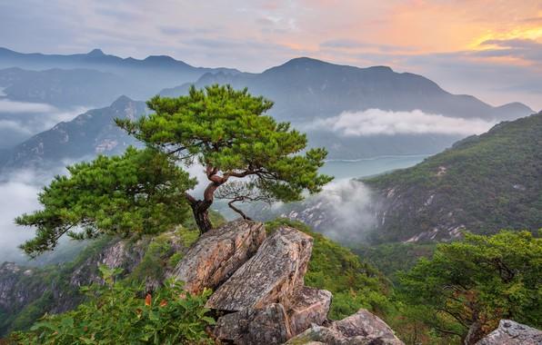 Картинка облака, пейзаж, горы, природа, туман, дерево, скалы, леса, сосна, Южная Корея