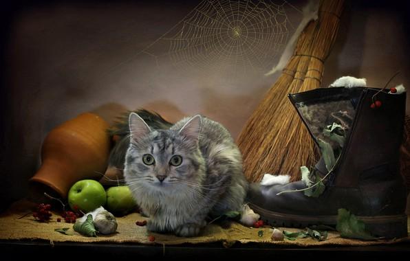 Картинка кошка, кот, листья, животное, яблоки, паутина, мышь, мешковина, чеснок, сапог, крынка, веник, Ковалёва Светлана, Светлана …
