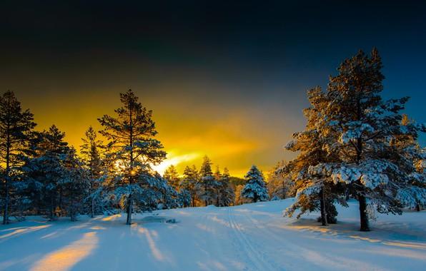 Картинка зима, снег, деревья, пейзаж, природа, утро, ели, Норвегия, дорожка, тени, Naglestadheia