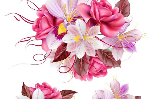 Картинка цветы, текстура, белый фон