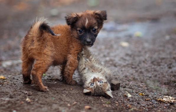 Картинка щенок, котёнок, малыши