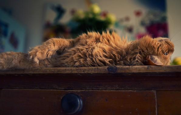 Картинка кошка, кот, поза, комната, пушистый, рыжий, лежит, ящик, комод, домашний