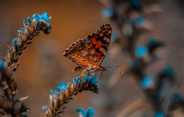 Картинка wallpaper, animals, nature, blue, butterfly, flowers, macro, blur, insects, 4k ultra hd background