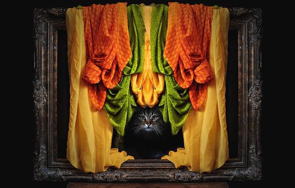 Картинка кошка, кот, взгляд, морда, серый, рама, фотошоп, оранжевая, картина, материя, рамка, ткань, черный фон, занавес, …