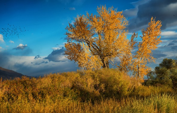 Картинка трава, листья, облака, деревья, пейзаж, птицы, тучи, природа, синева, дерево, настроение, ветви, растительность, листва, красота, …