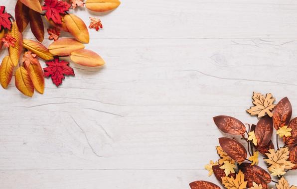Картинка осень, листья, фон, доски, colorful, клен, wood, background, autumn, leaves, осенние, maple