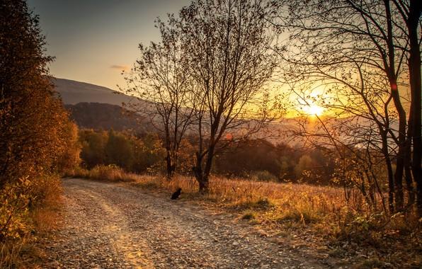 Картинка дорога, осень, кошка, закат, природа