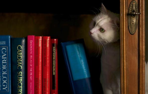 Картинка кошка, белый, кот, взгляд, темный фон, книги, полка, белая, шкаф, библиотека, натюрморт, котэ, книжный, вдумчивый