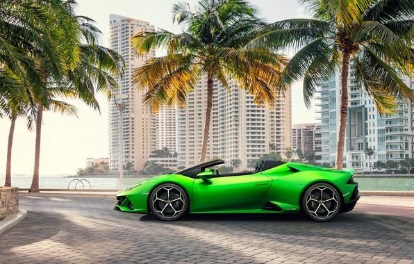 Картинка машина, пальмы, здания, Lamborghini, спорткар, Spyder, Evo, Huracan