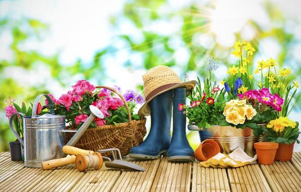 Картинка солнце, лучи, цветы, фон, корзина, шляпа, сапоги, сад, перчатки, лейка, горшки, верёвка, нарциссы, боке, маргаритки, …