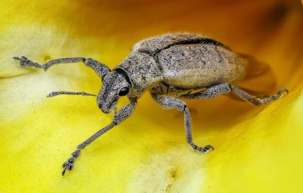 Картинка цветок, макро, желтый, жук, лепестки, насекомое, внутри цветка