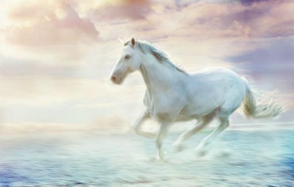 Картинка море, волны, белый, небо, облака, поза, туман, движение, конь, берег, лошадь, жеребец, красота, обработка, светлый, …