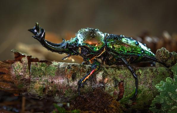 Картинка капли, макро, природа, зеленый, фон, дерево, жук, рога, насекомое, кора, блестящий, сучок