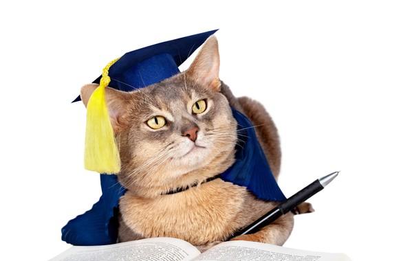 Картинка кот, юмор, шляпа, мордочка, ручка, белый фон, книга, кисточка, униформа, учёный
