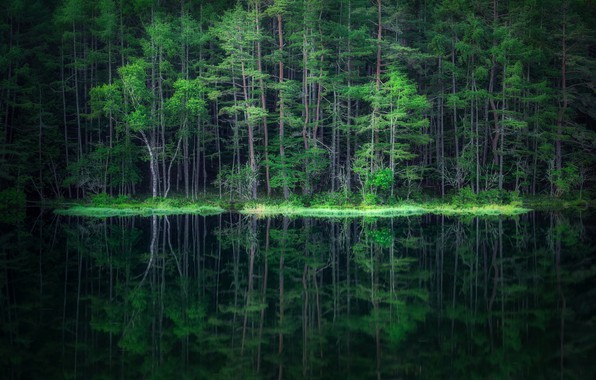 Картинка лес, вода, отражение, forest, water, reflection, Takeshi Mitamura