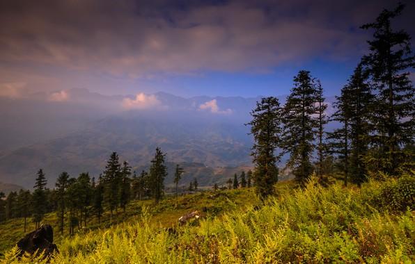 Картинка лес, лето, трава, облака, деревья, пейзаж, горы, природа, туман, холмы, камень, вид, высота, даль, ели, …