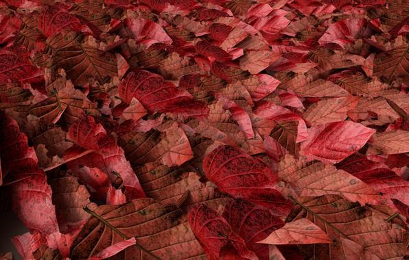 Картинка осень, листья, фон, colorful, red, autumn, leaves, осенние