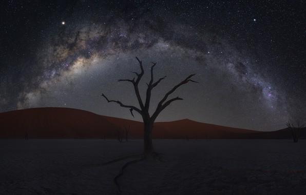 Картинка песок, дерево, пустыня, дюны, desert, Намибия, tree, sand, Namibia, dunes, Zhu Xiao