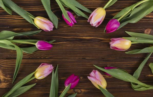 Картинка фон, тюльпаны, коричневый, композиция