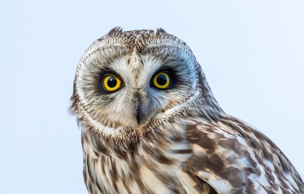 Картинка sky, eyes, owl