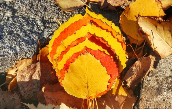 Картинка осень, желтый, Листья