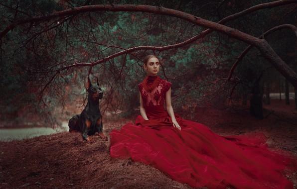 Картинка лес, девушка, ветки, стиль, собака, платье, сосны, красное платье, доберман, Анастасия Добровольская