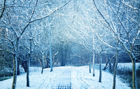 Картинка зима, снег, деревья, пейзаж, снежинки, природа, зимний, landscape, nature, beautiful, winter, snow, snowflakes
