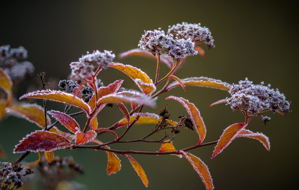 Картинка растение, frozen, изморозь