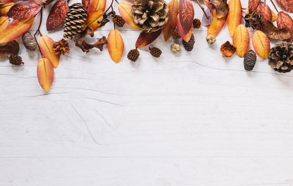 Картинка осень, листья, фон, доски, colorful, клен, шишки, wood, background, autumn, leaves, осенние, maple