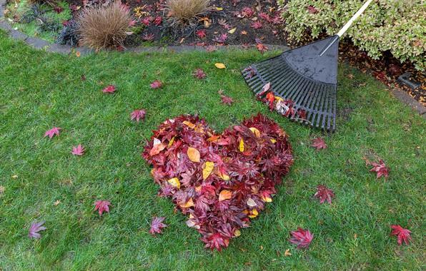 Картинка осень, трава, листья, любовь, сердце, colorful, red, love, клен, лужайка, heart, wood, autumn, leaves, romantic, …