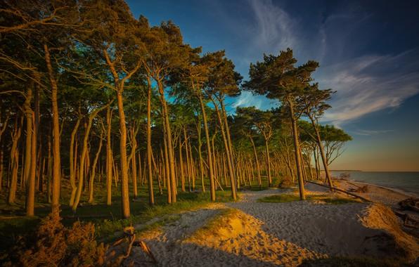 Картинка песок, лес, пляж, небо, облака, свет, деревья, ветки, природа, озеро, река, синева, стволы, берег, побережье, …