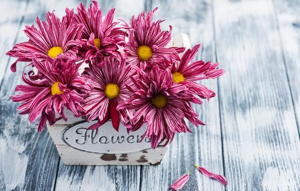 Картинка цветы, букет, хризантема, Фиолетовая