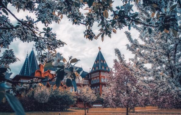 Картинка деревья, ветки, весна, сад, Москва, Россия, цветение, цветки, дворец, Коломенское, Дворец царя Алексея Михайловича, Коломенский …