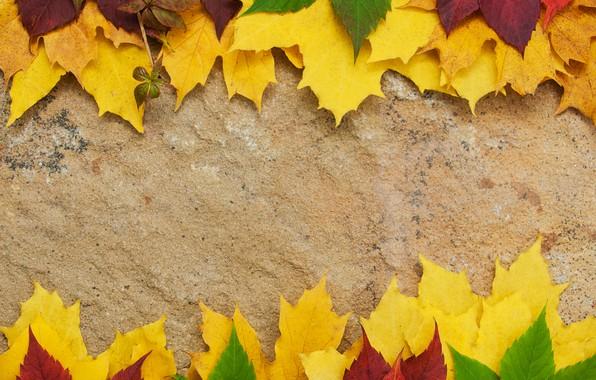 Картинка осень, листья, фон, доски, colorful, клен, wood, autumn, leaves, maple