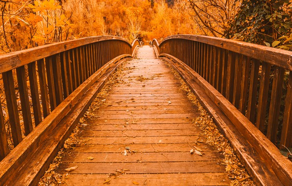 Картинка осень, листья, деревья, мост, парк, тропа, nature, yellow, bridge, park, autumn, leaves, tree, path