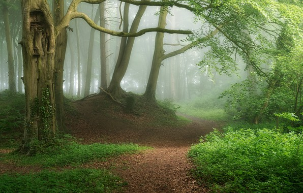 Картинка лес, туман, фото, тропинка
