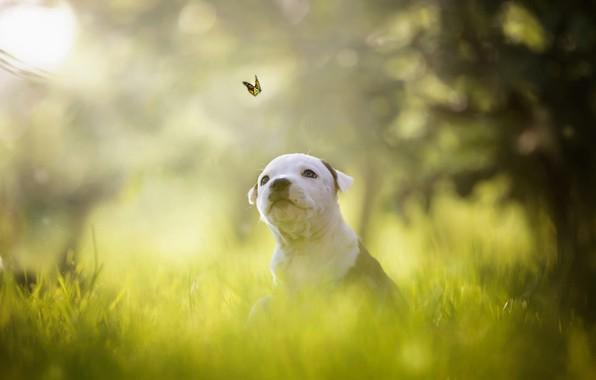 Картинка зелень, белый, лето, трава, взгляд, свет, полет, ветки, природа, поза, парк, фон, дерево, настроение, бабочка, …