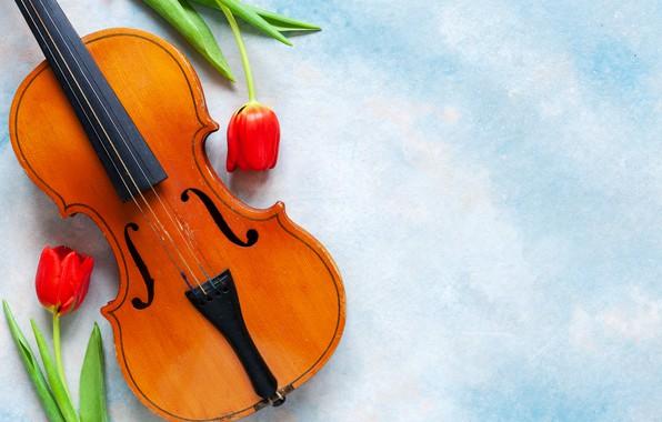 Картинка цветы, музыка, скрипка, тюльпаны