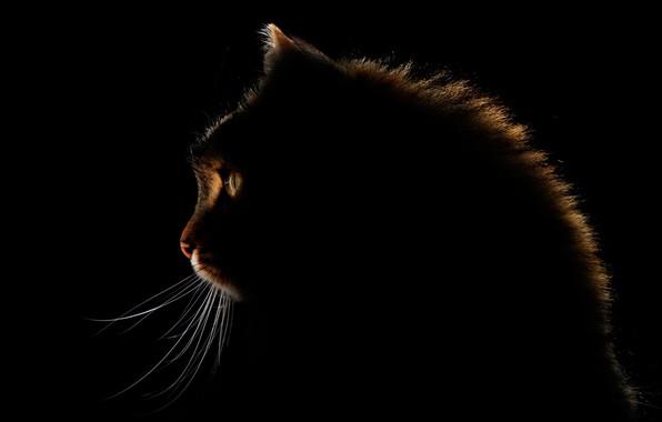 Картинка глаза, кот, усы, свечение, eyes, cat, glow, mustache, Antonio Grambone