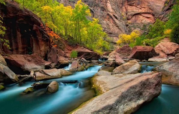 Картинка осень, деревья, камни, скалы, Юта, США, река Вирджин, Зайон
