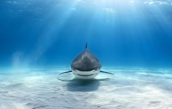 Картинка sea, shark, light beam