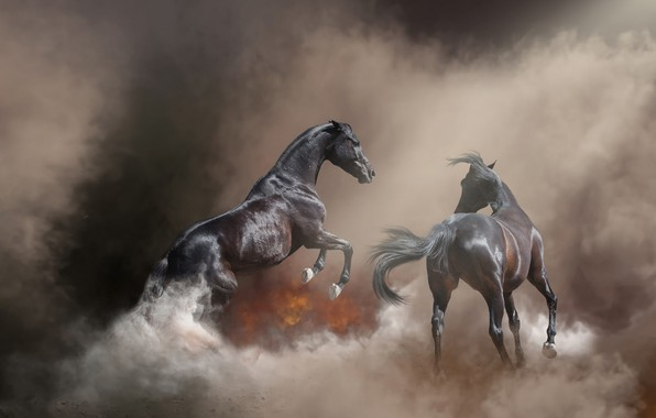 Картинка природа, поза, туман, фон, пожар, огонь, конь, лошадь, дым, жеребец, кони, обработка, лошади, пара, пар, ...