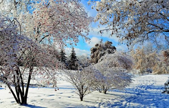 Картинка зима, облака, снег, природа, солнечный день, февраль, голубое небо, зимний пейзаж, мороз и солнце, следы …