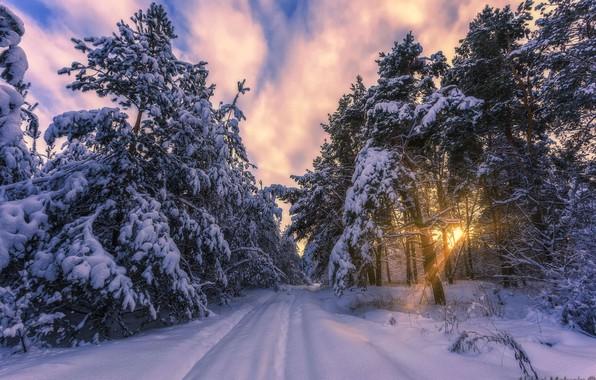 Картинка зима, лес, солнце, лучи, снег, мороз, сосны, Aleksei Malygin