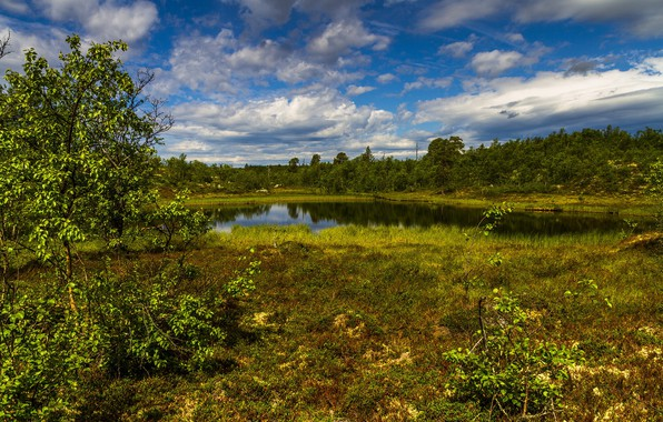 Картинка трава, деревья, пруд
