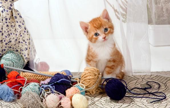 Картинка кошка, взгляд, клубок, поза, котенок, стол, шерсть, маленький, малыш, окно, рыжий, занавески, котёнок, шторы, нитки, …