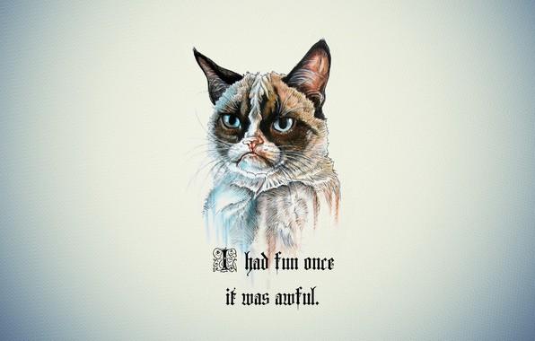 Картинка кот, фон, портрет